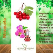 Beneficios y usos de la Rosa de Mosqueta